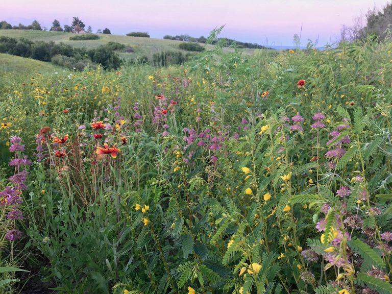 Pollinator Plot--First-year Bloom