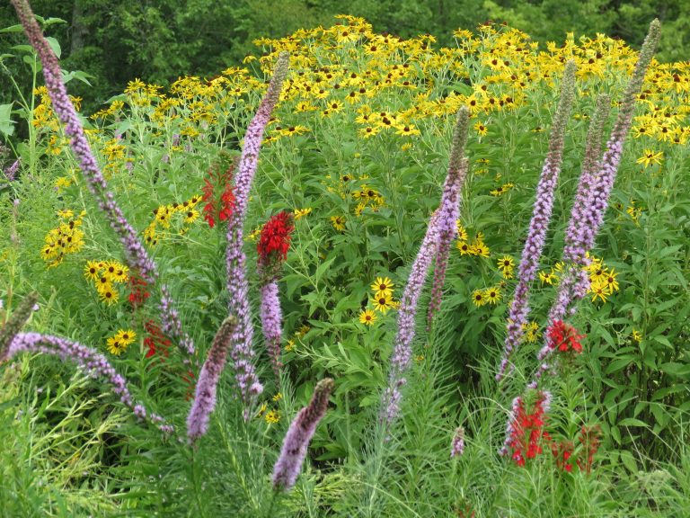 High Summer with the Native Plants at Maggie's Farm