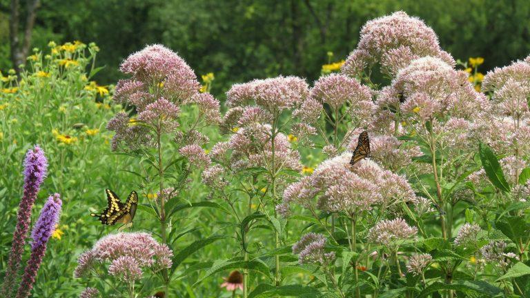 A Pollinators' Garden at Maggie's Farm
