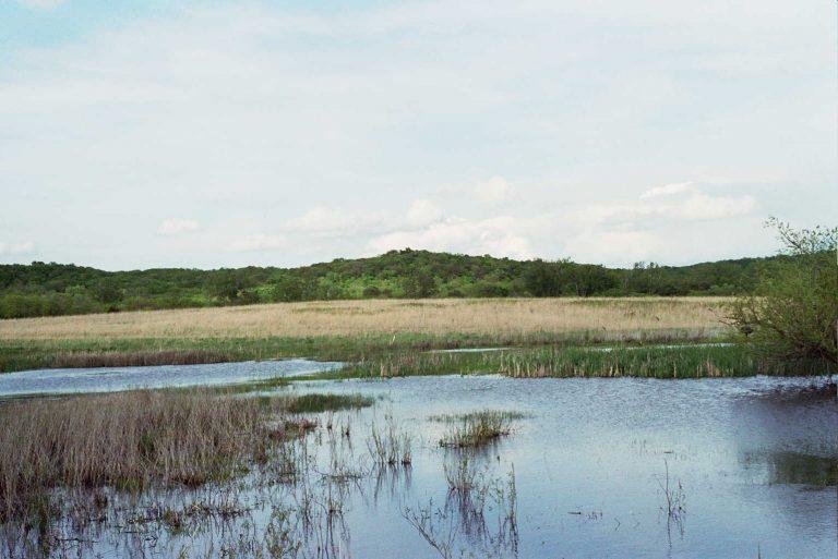 Suzanne Ecke McColl Nature Reserve -The Wetlands
