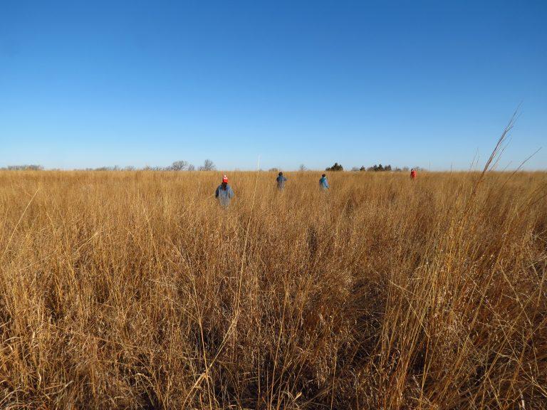 Trekking through the prairie in March, northwest of Osage City