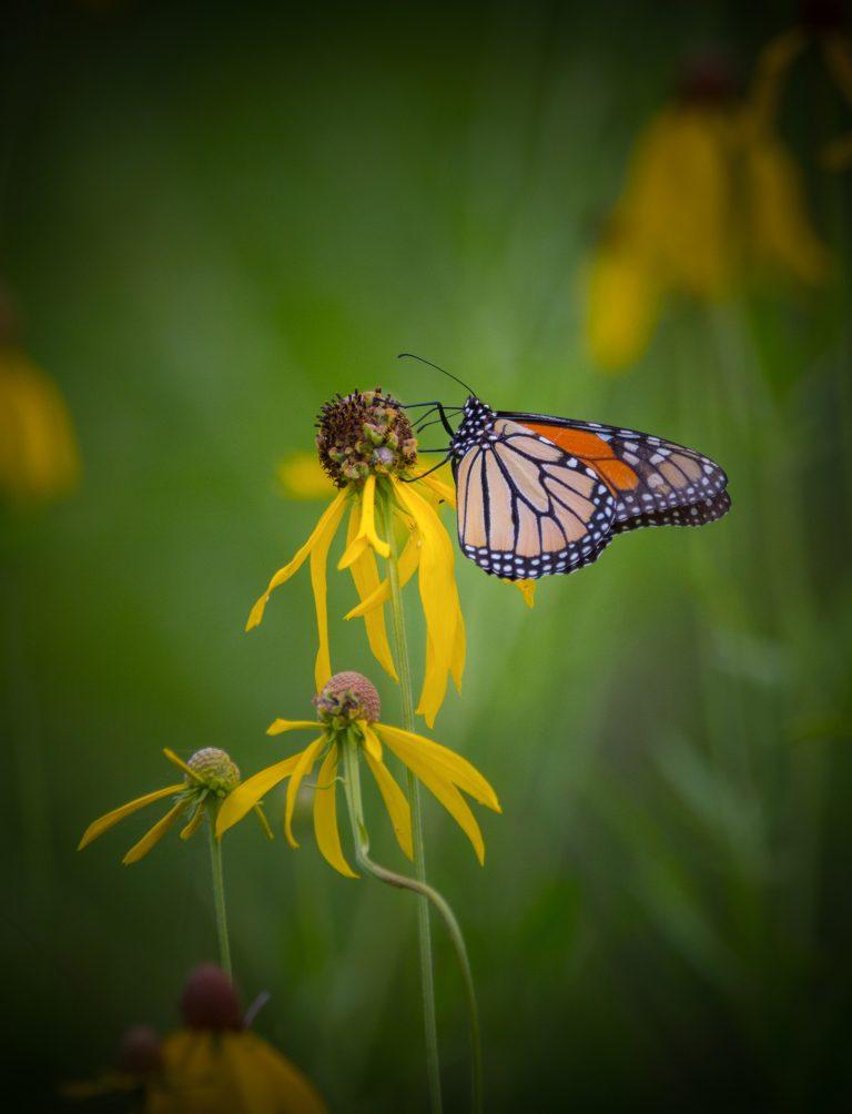 Mariposa Magic