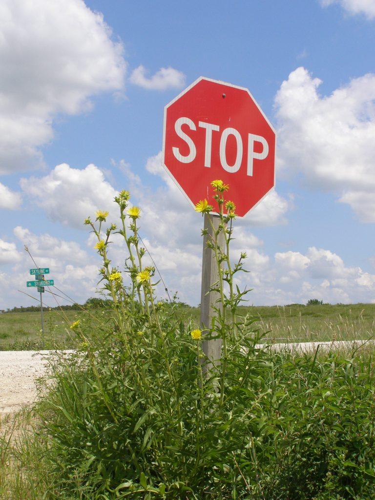 Compass Plant Skyline Drive, Wabaunsee County
